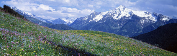Wildflowers Along Mountainside, Zillertaler, Austria