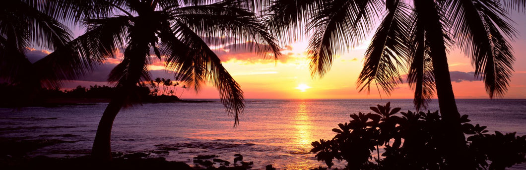 Palm trees on the coast, Kohala Coast, Big Island, Hawaii, USA