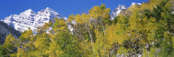 Forest with snowcapped mountains in the background, Maroon Bells, Aspen, Pitkin County, Colorado, USA