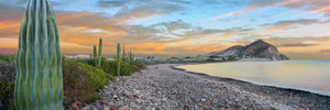 Cardon cacti line along the coast, Bay of Concepcion, Sea of Cortez, Mulege, Baja California Sur, Mexico