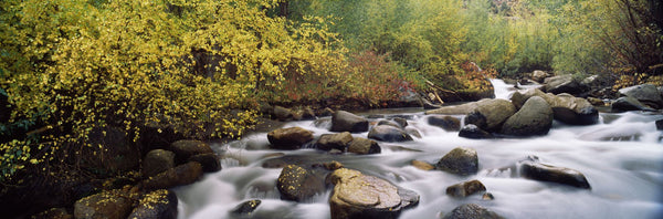 River passing through a forest, Inyo County, California, USA