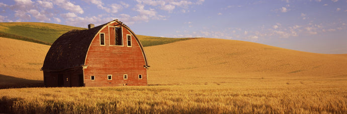 Old barn in a wheat field, Palouse, Whitman County, Washington State, USA