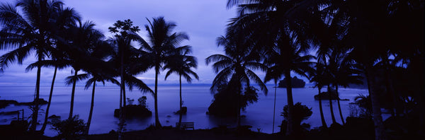 Silhouette of palm trees on the beach, Colombia