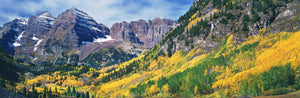 Aspen trees in autumn with mountains in the background, Maroon Bells, Elk Mountains, Pitkin County, Colorado, USA