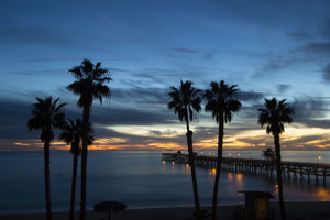 Silhouette of palm trees on the beach, San Clemente, Orange County, California, USA