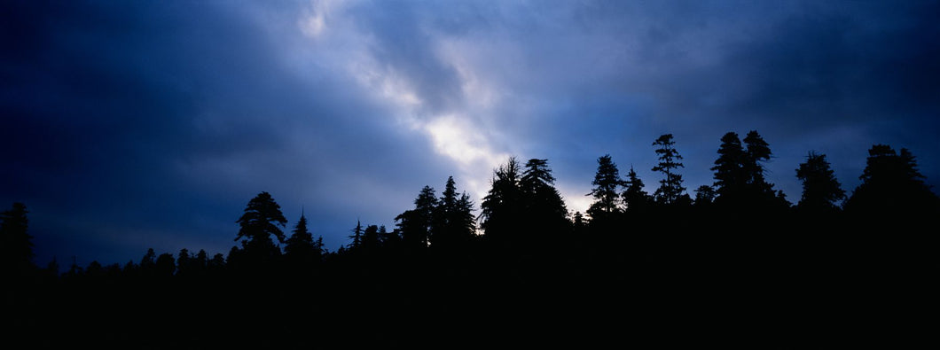 Silhouette of trees at dusk, Prairie Creek Redwoods State Park, Redwood National Park, California, USA