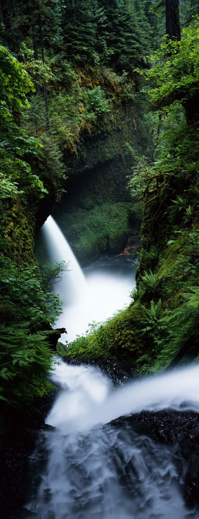 High angle view of waterfall in a forest, Sorenson Falls, Metlako Falls, Eagle Creek, Columbia River Gorge, Oregon, USA