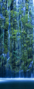 Waterfall in a forest, Mossbrae Falls, Sacramento River, Dunsmuir, Siskiyou County, California, USA