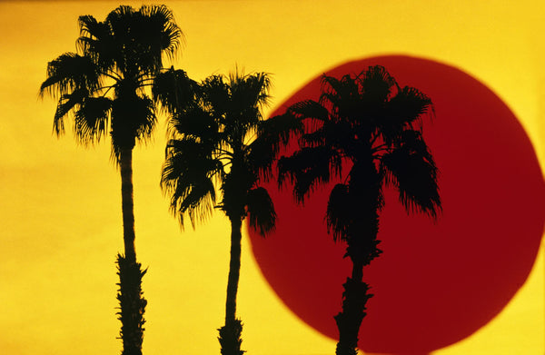 1990s 3 SILHOUETTED PALM TREES AGAINST YELLOW SKY WITH BIG RED SUN