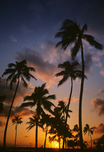 SILHOUETTED TROPICAL PALM TREES SUNSET HAWAII