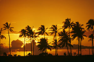 SILHOUETTED PALM TREES IN ORANGE YELLOW SUNSET ALA MOANA PARK HAWAII
