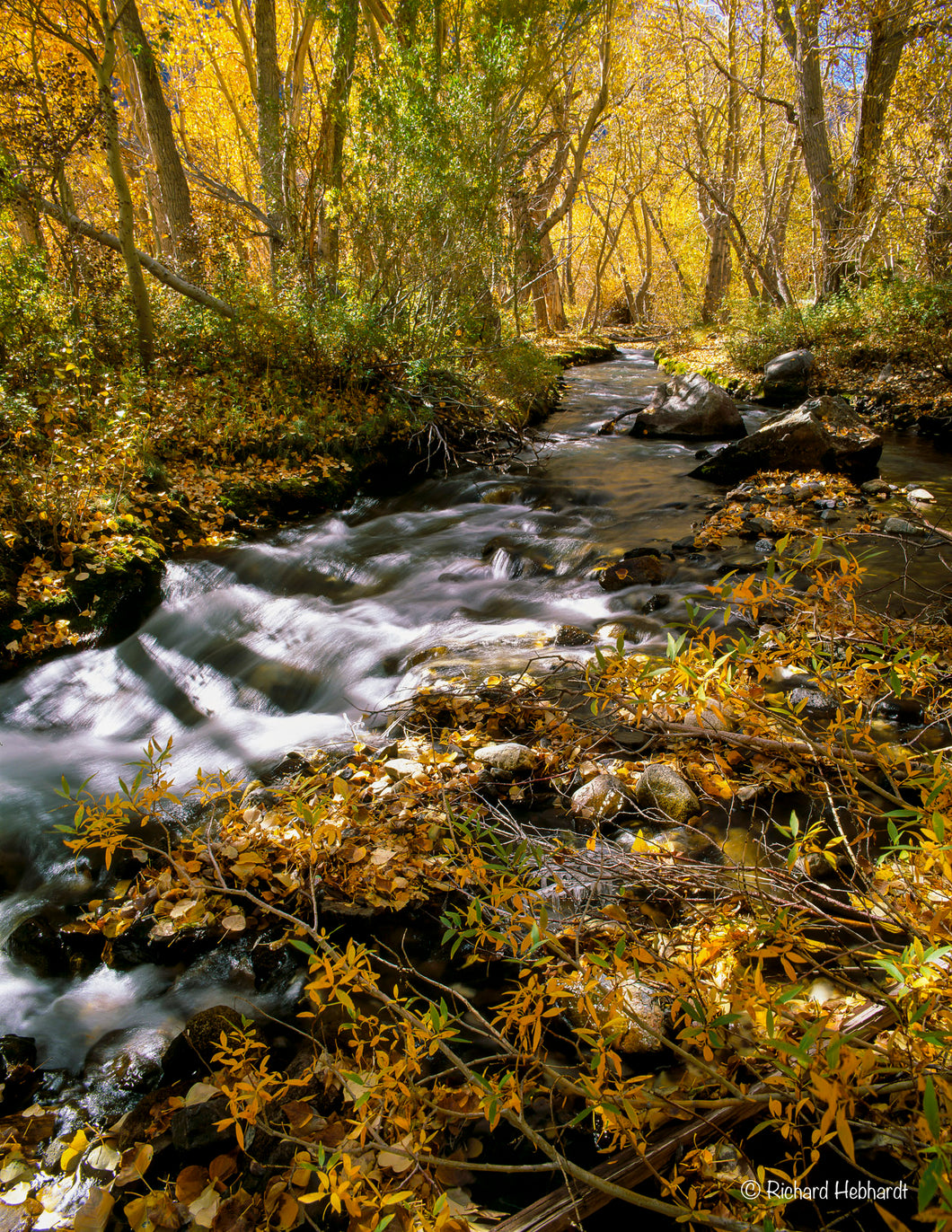 Autumn, McGee Creek, E. Sierra Nevada Mtns., CA
