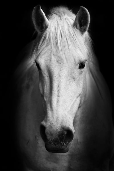 WHITE HORSE FACE