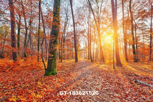 AUTUMN FOREST WITH BRIGHT SUN