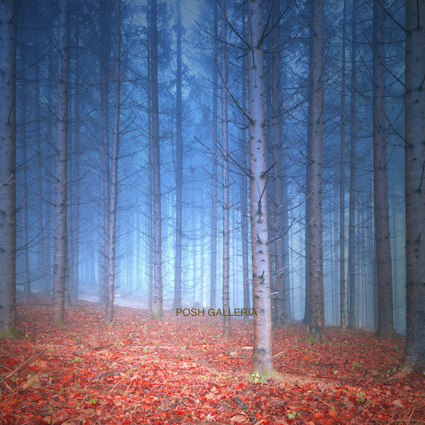 BLUE FOREST WITH RED AUTUMN LEAVES ON GROUND