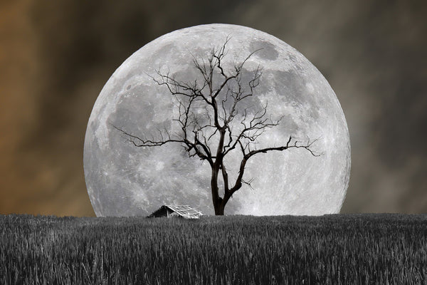 MOON BEHIND TREE AND BARN