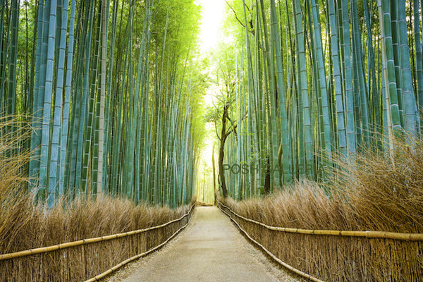 BLUE GREEN BAMBOO WALKWAY