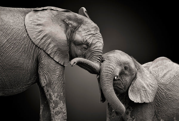 ELEPHANT MOTHER & CHILD
