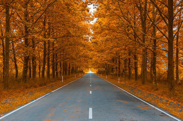 ORANGE AUTUMN LEAVES ON ROAD