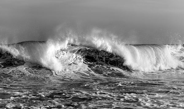 WILD WAVE IN BLACK AND WHITE