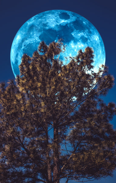 MOON BEHIND TREE LARGE