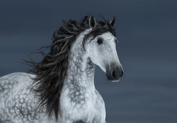 GRAY SPOTTED HORSE