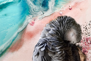 Ocean Bird. Teal and Pink. Pink Gallah Parrot. Art Print Antuanelle 3 Bird Artwork. Limited Edition