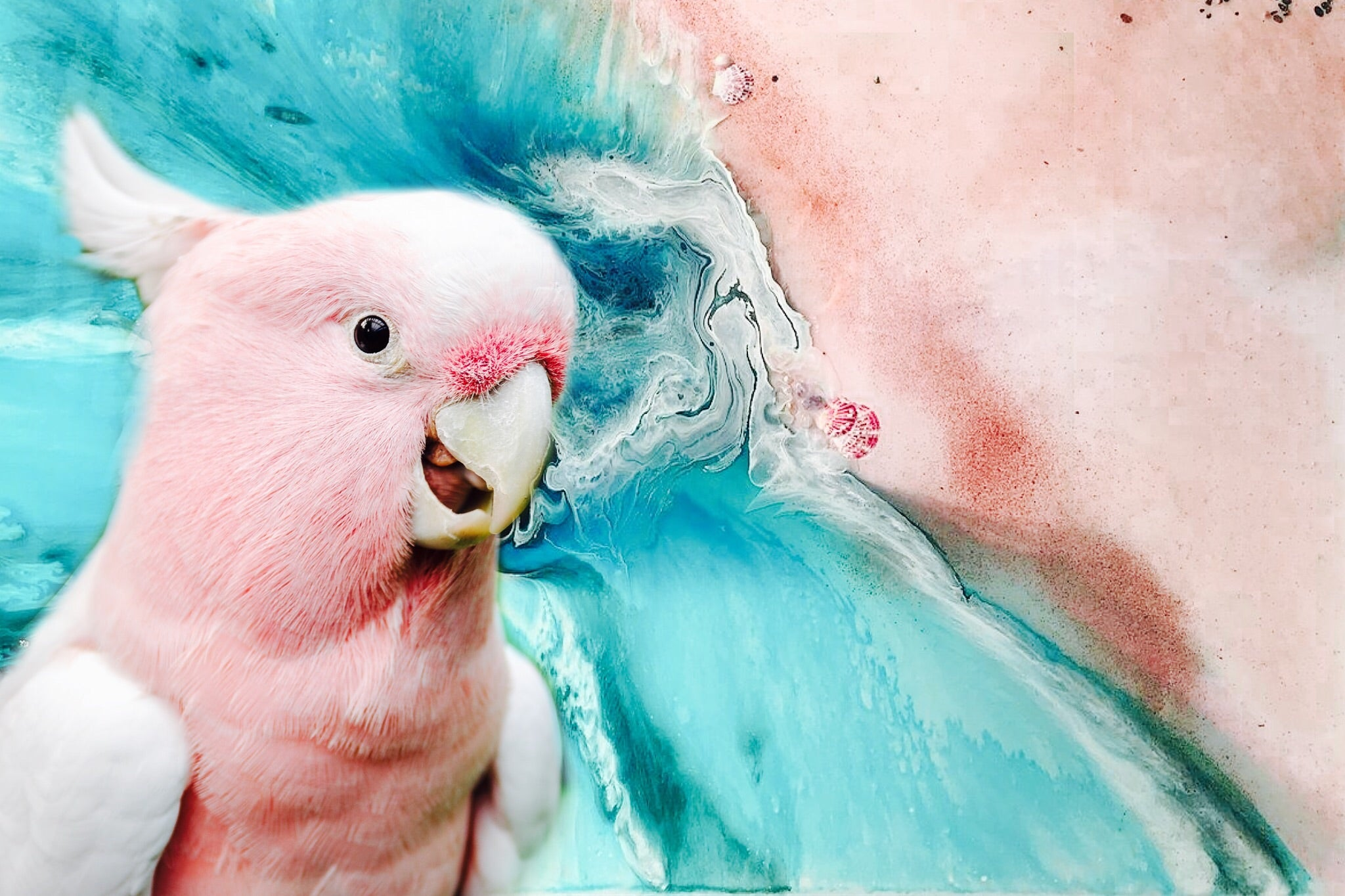 Ocean Bird. Teal and Pink. Pink Gallah Parrot. Art Print Antuanelle 2 Bird Artwork. Limited Edition