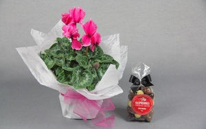 Real Florist. Real Flowers. Melbourne Online Delivery. Same Day | Mother's Day Cutie