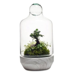 Real Florist. Real Flowers. Melbourne Online Delivery. Same Day | San Jose Terrarium - Large