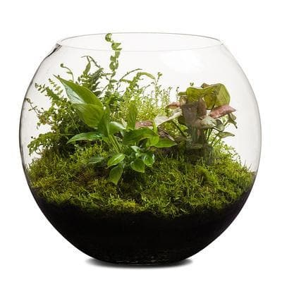 Real Florist. Real Flowers. Melbourne Online Delivery. Same Day | Revival Fishbowl - 30cm