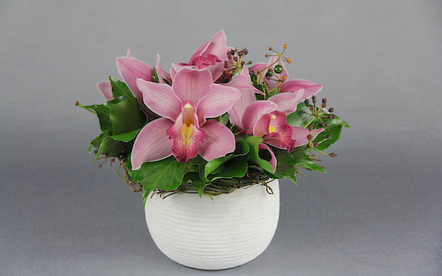 Real Florist. Real Flowers. Melbourne Online Delivery. Same Day | Cymbidium Cuteness
