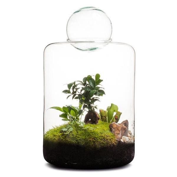 Real Florist. Real Flowers. Melbourne Online Delivery. Same Day | Garden of Eden Terrarium