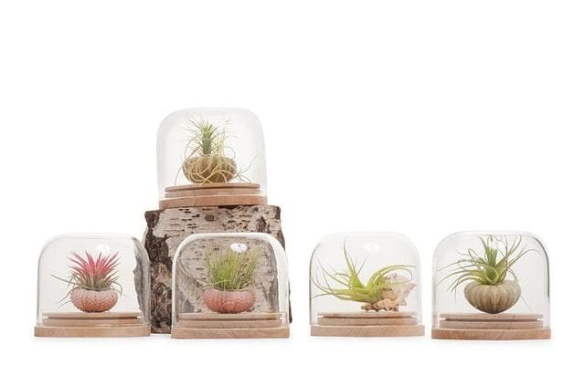 Real Florist. Real Flowers. Melbourne Online Delivery. Same Day | Tillandsia Dome