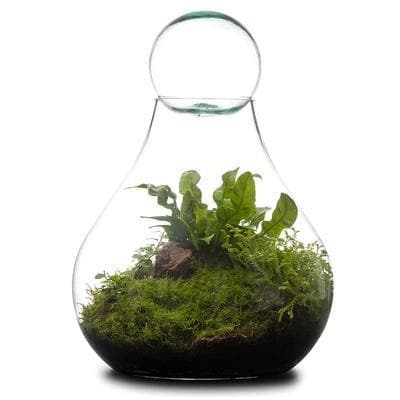 Real Florist. Real Flowers. Melbourne Online Delivery. Same Day | Bulb Terrarium