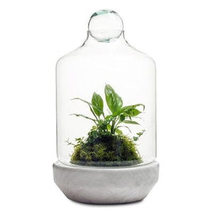 Real Florist. Real Flowers. Melbourne Online Delivery. Same Day | San Jose Terrarium - Medium
