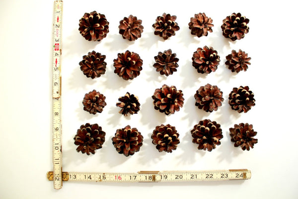 Real Pinecones