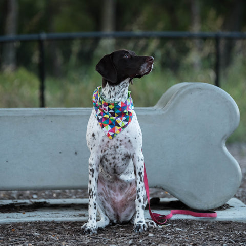 "Personalized Geometric Dog Bandana ""It's Cool To Be Square"""