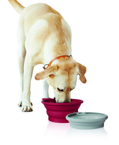 Pet Parade - Pop-up Food & Water Bowl
