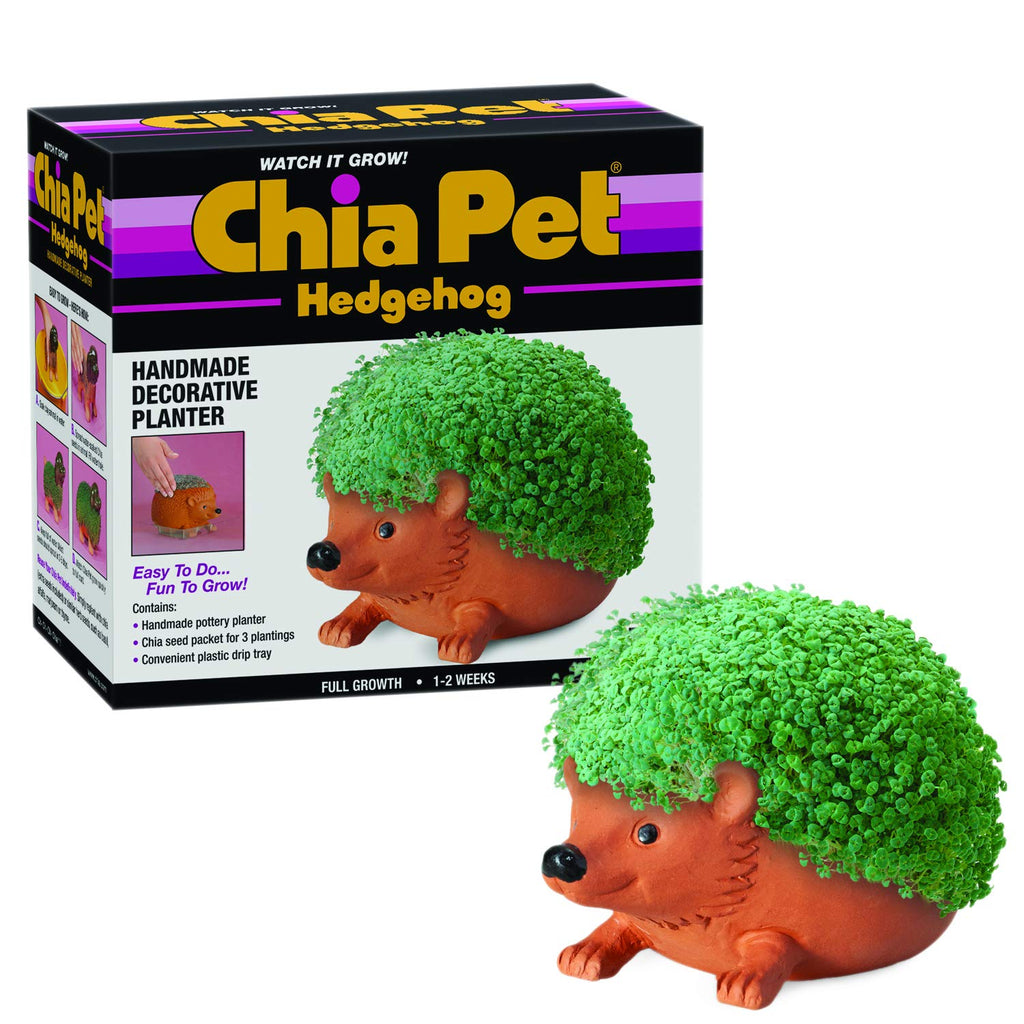 Chia Pet Planter- Hedgehog