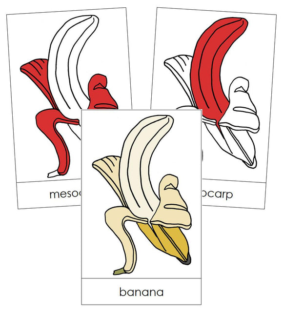 Banana Nomenclature Cards (red) - Montessori Print Shop