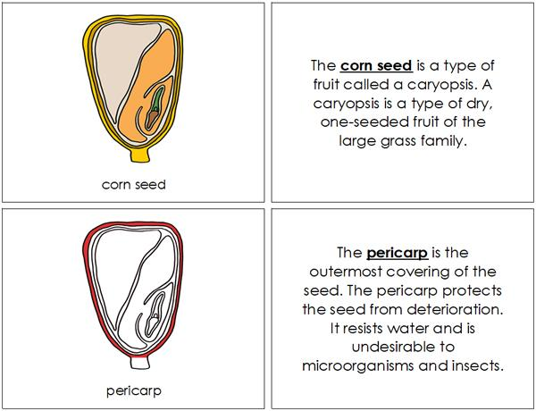 Corn Seed Nomenclature Book (Red) - Montessori Print Shop