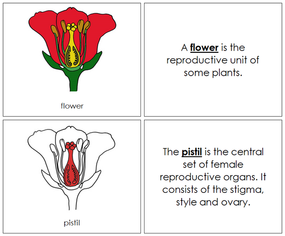 Flower Nomenclature Book (red) - Montessori Print Shop
