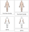 Human Body Nomenclature 3-Part Cards - Montessori Print Shop