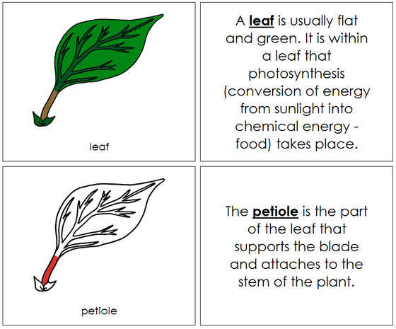 Leaf Nomenclature Book (red) - Montessori Print Shop