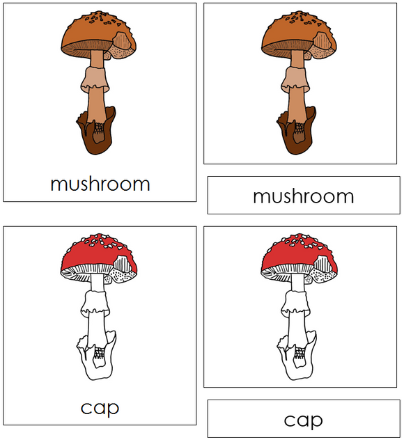 Mushroom Nomenclature Cards (red) - Montessori Print Shop