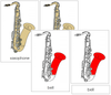 Saxophone Nomenclature Cards (red) - Montessori Print Shop