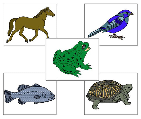 Zoology Nomenclature Bundle Set 1 - Montessori Print Shop