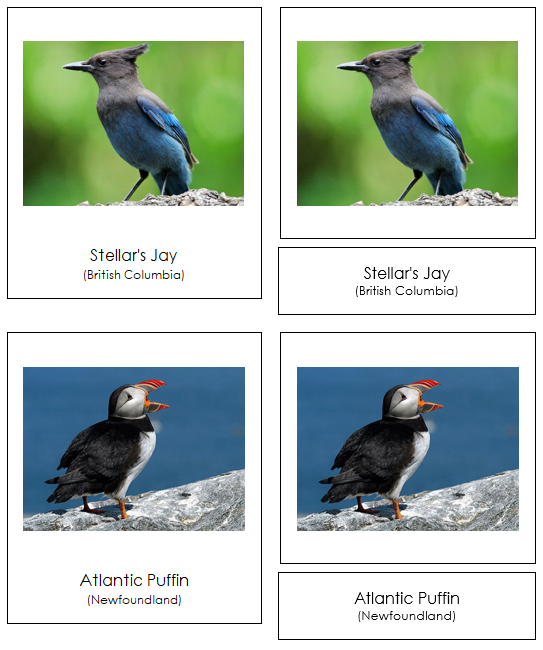 Canadian Provincial Birds - Montessori geography cards