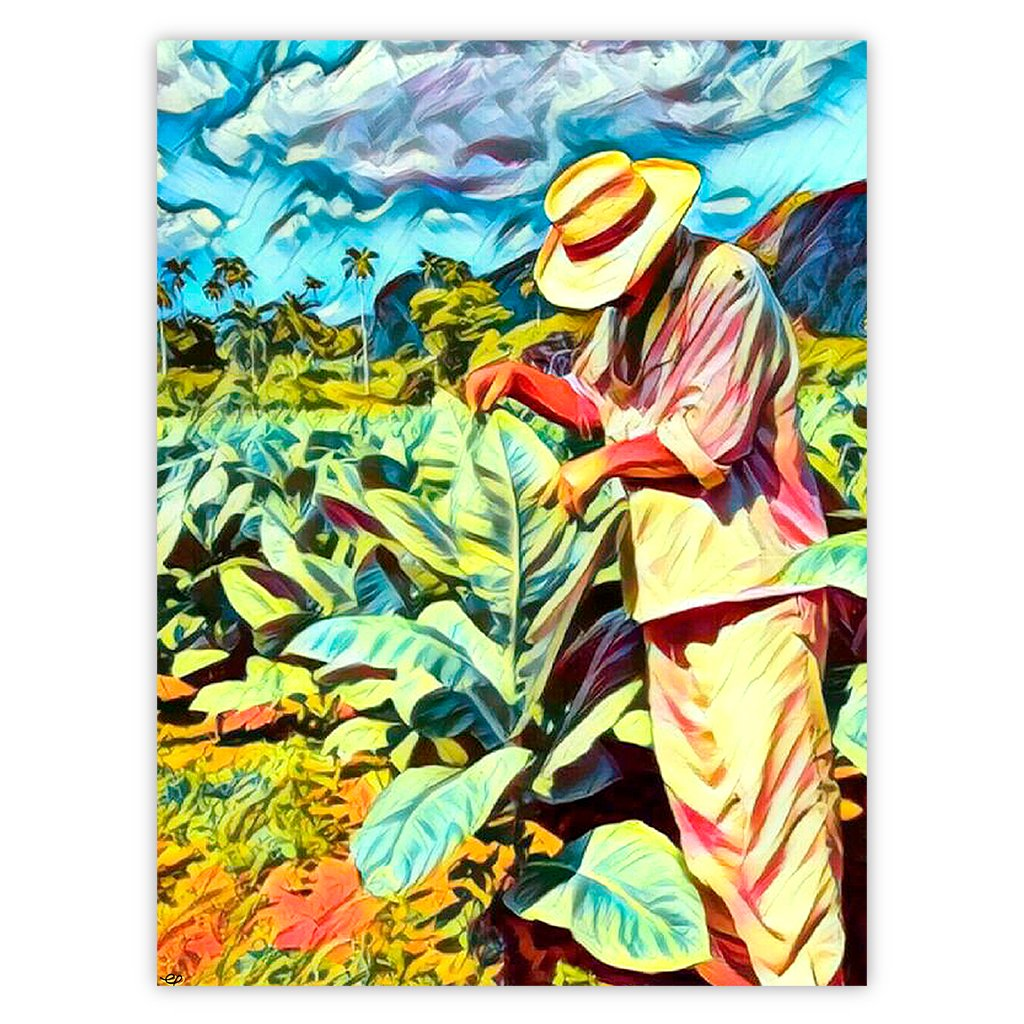 Tobacco Fields Dos